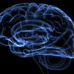 Апатия человека связана сособым строением мозга — Ученые