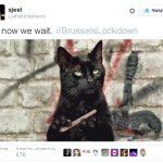 Социальная сеть Twitter заполнился котами после просьбы не обговаривать рейды вБрюсселе