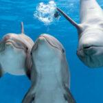 Дельфины видят человека особым образом— Мексиканские ученые