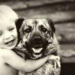 Учёные узнали, что собаки умеют распознавать эмоции человека