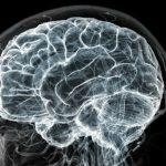 Ученые отыскали ген, являющийся первопричиной развития шизофрении