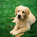 Английские учёные создали тест поопределениюIQ собак