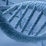 Учёные отыскали гены, отвечающие засчастье иблагополучие