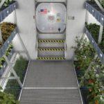 Экипаж МКС займется выращиванием китайской капусты