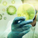 ВКрасноярском крае ученые обнаружили природные антибиотики