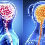 Ученые: женский мозг работает результативнее мужского