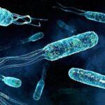 Найдены способные перерабатывать бутылочный пластик бактерии