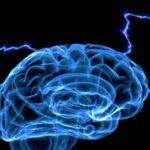 Американские ученые планируют оживить мозг мертвого человека