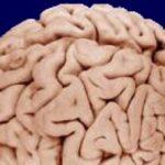 Учёные узнали, как реагирует мозг наперемещения впространстве при помощи «телепортации»