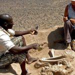 ВоФлориде найдены следы прежде неведомой цивилизации